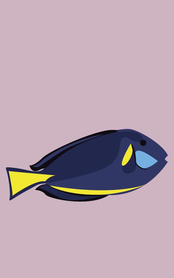 Vissen3_Tekengebied 1